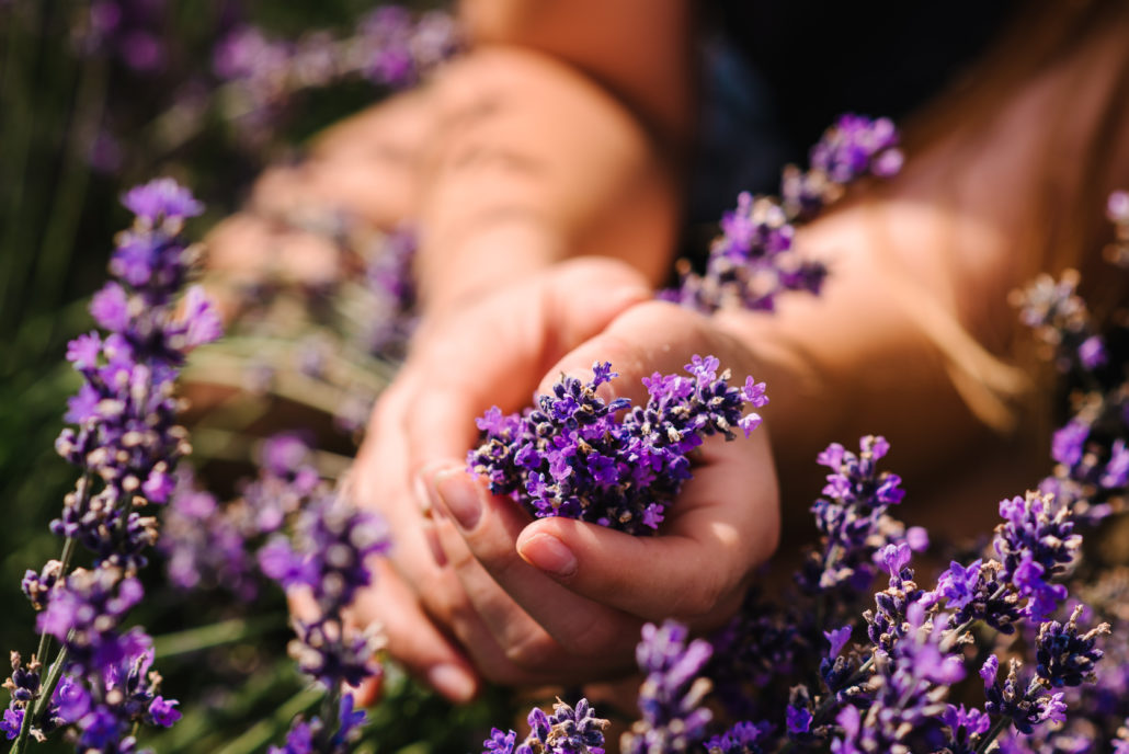 Relaxing Effects of Lavender